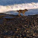 Winthrop Beach Dog 2 by photosbycoleen