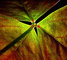Under the Shamrock by Sue  Cullumber