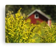 Little Red Shed on the Prairie Canvas Print