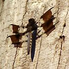 Dragonfly on the Tree by ebred