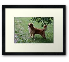 Lady Gracie Showing Her Lovely Self- 10 Framed Print