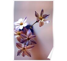 just floral Poster