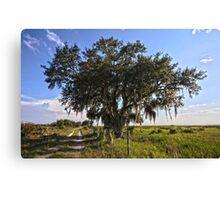 Solo Tree Kissimmee Prairie FL Canvas Print