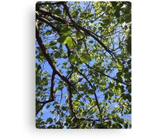 Green Leaves on Blue Canvas Print