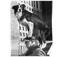 Piggy Back Dog B&W Poster
