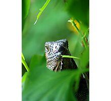 Old Green Iguana - Costa Rica Photographic Print