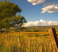 A Field in the Country by JoAnn Glennie