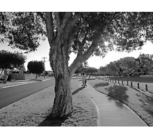 Grey Suburbia Photographic Print