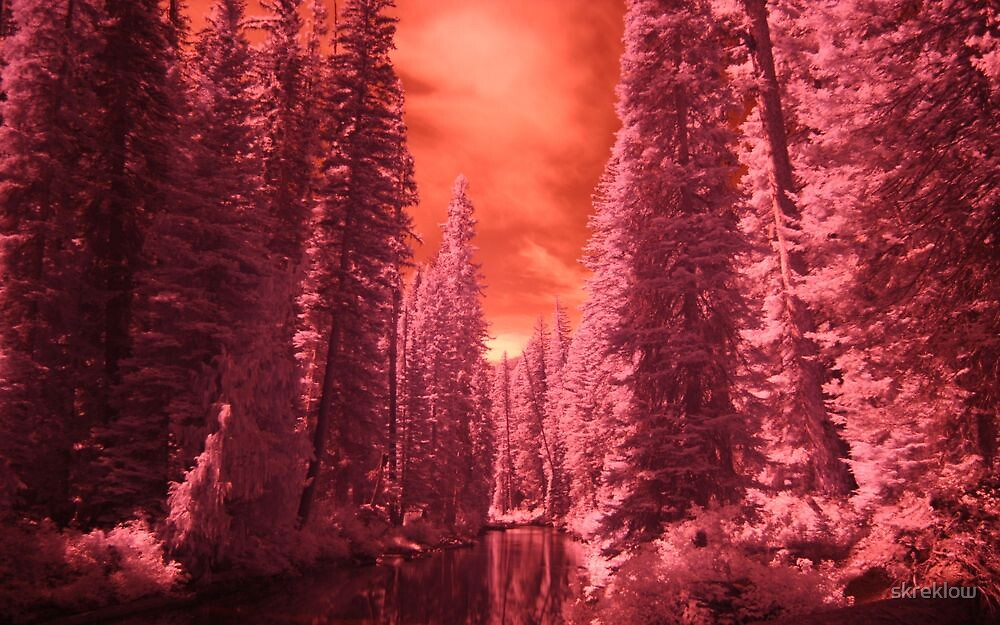 Forest and river in infrared. by skreklow