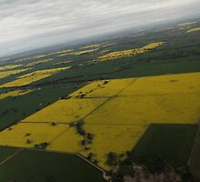 Canola Patchwork  by David Hunt
