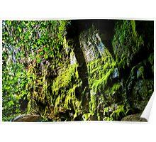 Moss Garden, Carnarvon Gorge(2) Poster