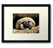 Desert Tortoise Framed Print