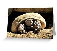 Desert Tortoise Greeting Card