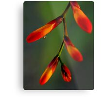 Natures Richness  Metal Print
