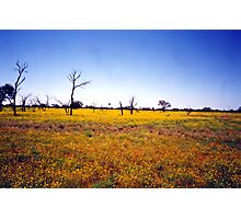 Outback Wildflowers Photographic Print