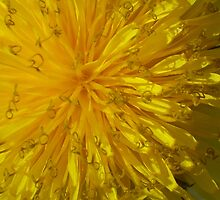 A Dandelion Does by Erica Corr