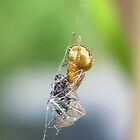 The spider and his lunch. by Emma Coles