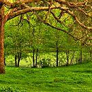 Montsalvat re-visited by Judi Corrigan