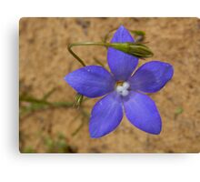 Wahlenbergia Canvas Print