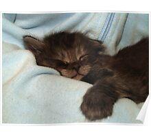 Sleepy Little Kitten Poster