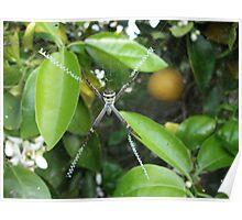 Spring Spider Poster