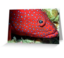 Blue spotted tamarin wrasse Greeting Card