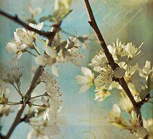 Springtime Blossoms by Lorraine Creagh