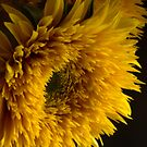 Double Shine Sunflowers - Up Close and Glowing by Ann Garrett