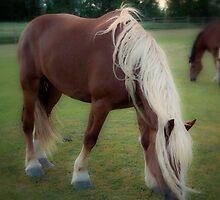 Belgian Blonde by peaceofthenorth