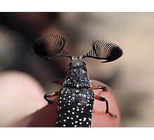 Feather-horned Beetle Photographic Print
