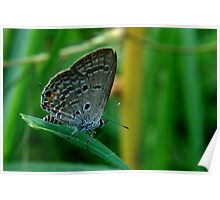 Tiny Butterfly Poster