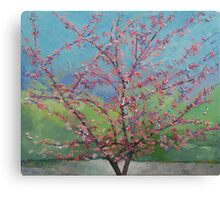 Eastern Redbud Tree Canvas Print