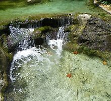starfish wishes by rhonda foster