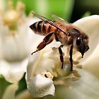 Orange Blossom Bee by Ann  Palframan