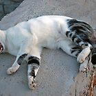 Sleeping cat  by KateSecretwomen