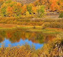 Snake River Reflections by Stephen Vecchiotti