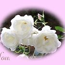 Thank You with White Roses by Dawnsuzanne