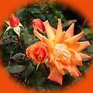 Orange Roses set in Orange by Dawnsuzanne