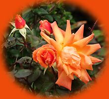 Orange Roses set in Orange by Dawnsuzanne