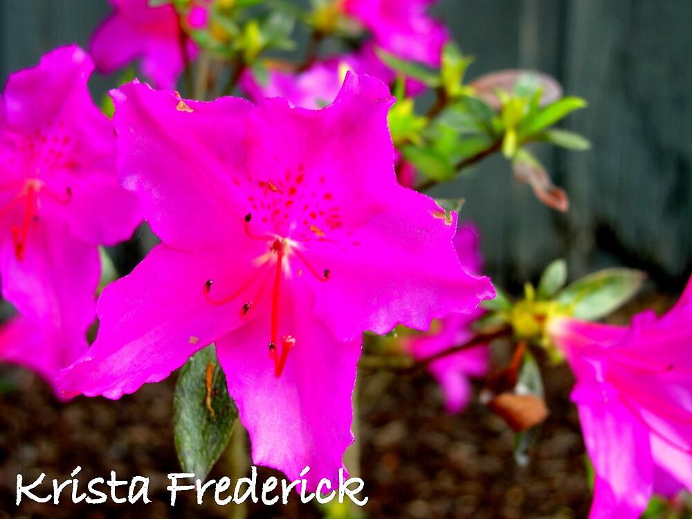 Pink 'n' Peppy! by kristafrederick