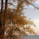 Along The Shores Of Lake Michigan In Fall by kkphoto1