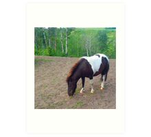 Tobiano Mini Grazing Art Print