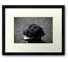 Black Lab - Lily Framed Print