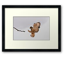 Favourite Branch Framed Print