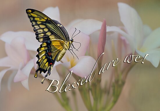 Blessed are we! by Bonnie T.  Barry