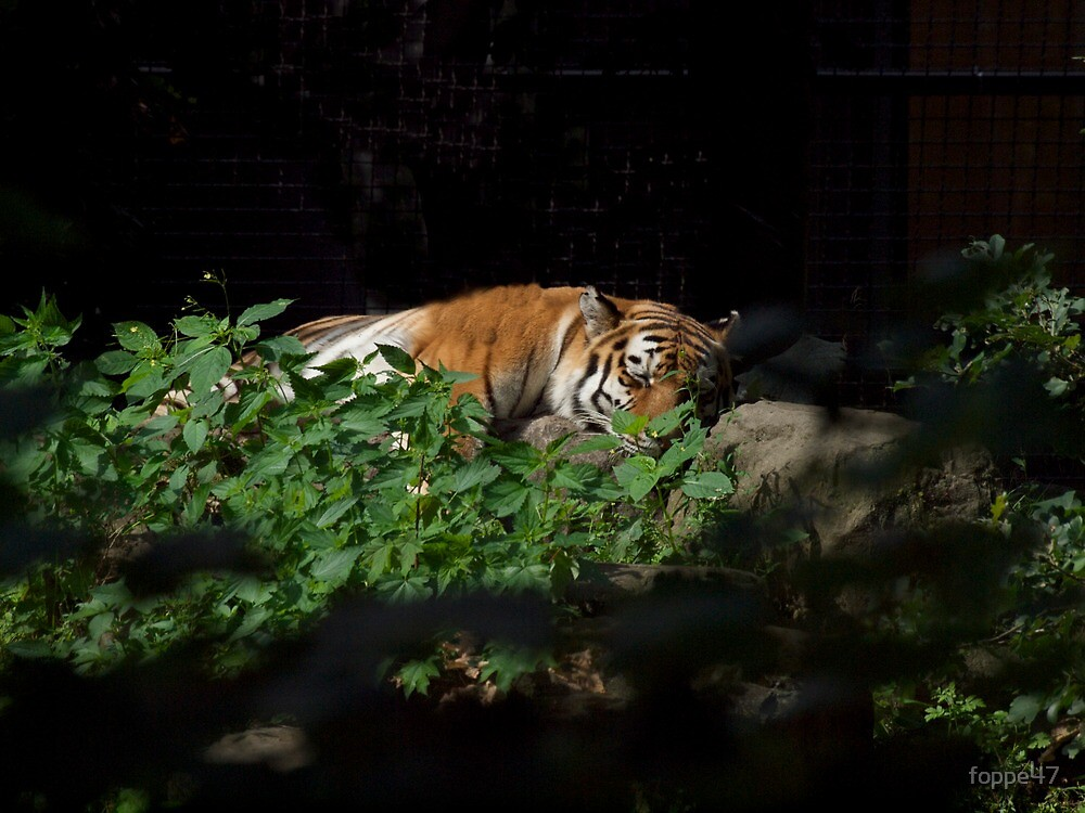 Sleeping Tiger by foppe47