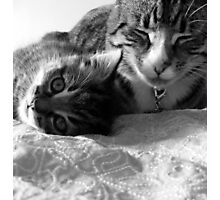 Kitty love Photographic Print