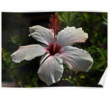 """ Hibiscus "" Poster"