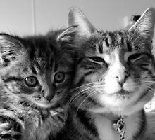 Kitty love II by Elizabeth Rose Rawlings