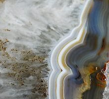 Petrified Wood by seabelly